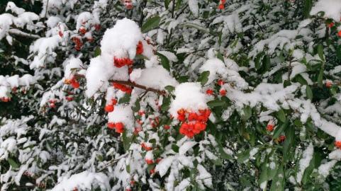 Dann der Schnee